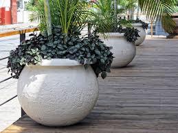 Unique Plant Pots 67 Best Unique Planters Images On Pinterest Plants Pots And