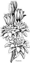 208 best flower sketch images images on pinterest drawings
