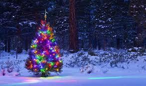 outdoor christmas tree outdoor christmas trees with lights chritsmas decor