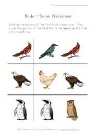 13 best bird worksheets images on pinterest