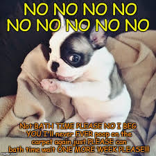 French Bulldog Meme - french bulldog meme generator imgflip