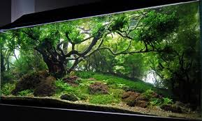 Aquascaping Techniques Les Differents Styles