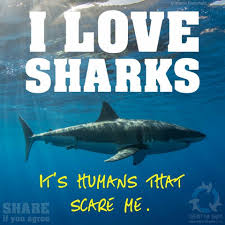 scare is the wrong word but i do love sharks of all kinds