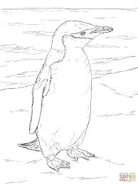 realistic chinstrap penguin coloring page free printable