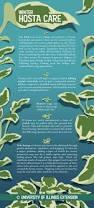 best 25 winter plants ideas on pinterest indoor air quality