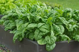6 fast growing vegetables for beginner gardeners