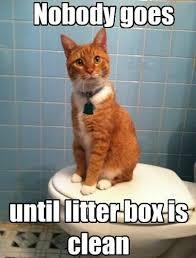 Clean Cat Memes - clean cat memes image memes at relatably com