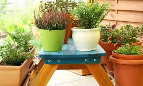 terrace gardening 5 tips for terrace gardening