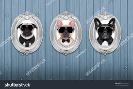 three cool dogs frames hanging on stock photo 231420193 shutterstock