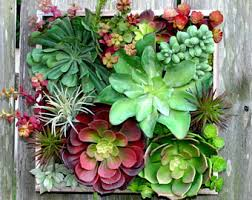 succulent wall etsy