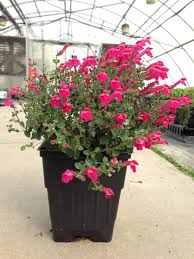 Flower Pot Center Greenhouse Product Sizing Guide