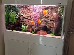 best 25 4ft fish tank ideas on types of jellyfish