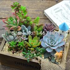 Small Desk Plants 50pcs Bag Succulent Plant Seeds Indoor Office Small Desk Plants