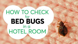 How To Check For Bed Bugs At Home Three Tips To Help You Avoid Hitchhiking Bed Bugs From A Hotel Room