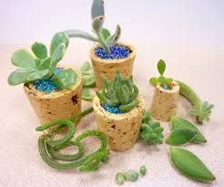Cactus Planters by Cork Micro Planters
