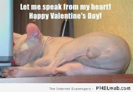 Valentine Meme Funny - funny cat pics when the wild kitty cats take control pmslweb