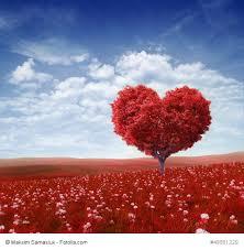 antwort frage leben liebe seele 77 liebeszitate die du lieben wirst witzig romantisch
