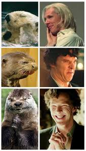 Benedict Cumberbatch Otter Meme - 70 best benedict cumberbatch is an otter wtfismylife images on