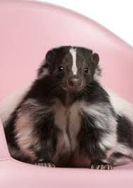 How Do You Get Rid Of Skunks In Your Backyard How To Get Rid Of Skunks In Your Backyard Garden Wishlist