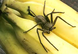 what should you do if you find a spider in your house