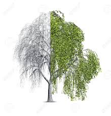 3d render of a willow tree that is shown as half bare and half