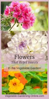 best 25 flower garden layouts ideas on pinterest raised garden