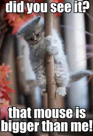Scared Cat Meme - no need to be a scared kitty