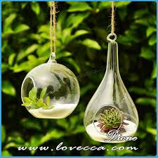 sha air plant terrarium hanging glass globe air plants