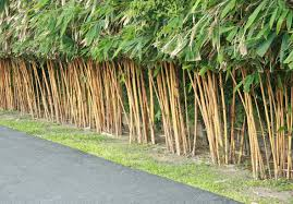 garden design garden design with planting bamboo wall stock photo