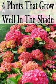 101 gardening plants that grow in shade landscaping gardening