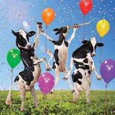 cow greeting cards cow streamers birthday card happy birthday to moo 3d
