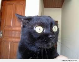 Gato Meme - meme de gato espantado