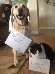 Dog Shaming Meme - dog shame i hump the cat daily i like it funny dog top