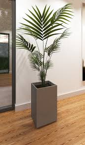 3ds max indoor palm plant haammss