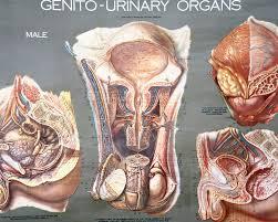 Human Anatomy Torso Diagram Female Human Anatomy Organs Diagram Www Uocodac Com