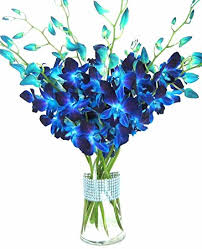 premium cut blue orchids 10 stems orchid with
