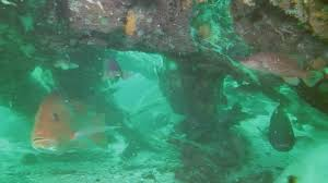 Alabama forest images Ancient forest lies 10 miles off the alabama coast video gallery jpg