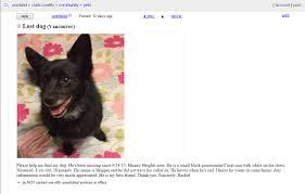 belgian sheepdog craigslist 9 things you should do immediately if your dog goes missing