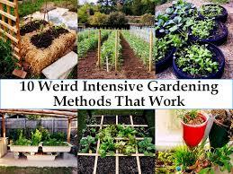 intensive gardening layout backyard top tips starting your own vegetable garden inspired