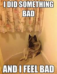 Bad Dog Meme - i m a bad dog i has a hotdog dog pictures funny pictures of