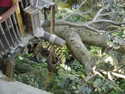 100 swiss family robinson treehouse pictures live like a