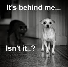 Funny Cat And Dog Memes - image cat meme scary black cat dog meme funny animals funny