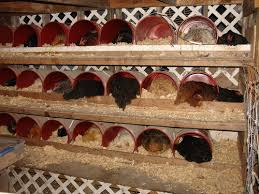 recycle buckets as nesting boxes on the farm pinterest nest