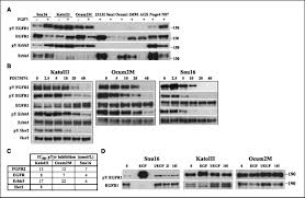 fgfr2 amplified gastric cancer cell lines require fgfr2 and erbb3