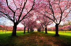 world s most beautiful trees photography part 2 one big photo