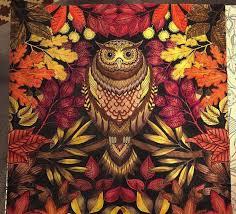 94 best owl secret garden coruja jardim secreto images on