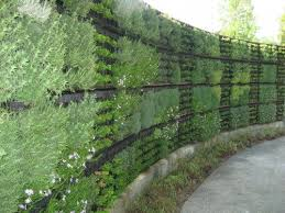 living wall with alternating pattern of plants going up