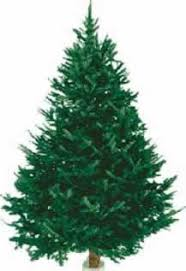 countrymax com gift christmas balsam fir fresh cut
