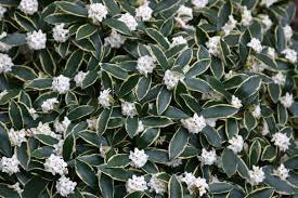 the winter garden erica glasener