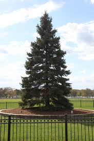 watch the national christmas tree lighting online today the yule